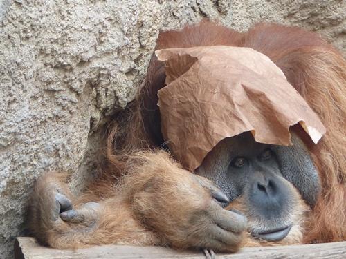 Fantasy wohin man schaut: Der Librarian aus der Scheibenwelt zu Besuch im Leipziger Zoo